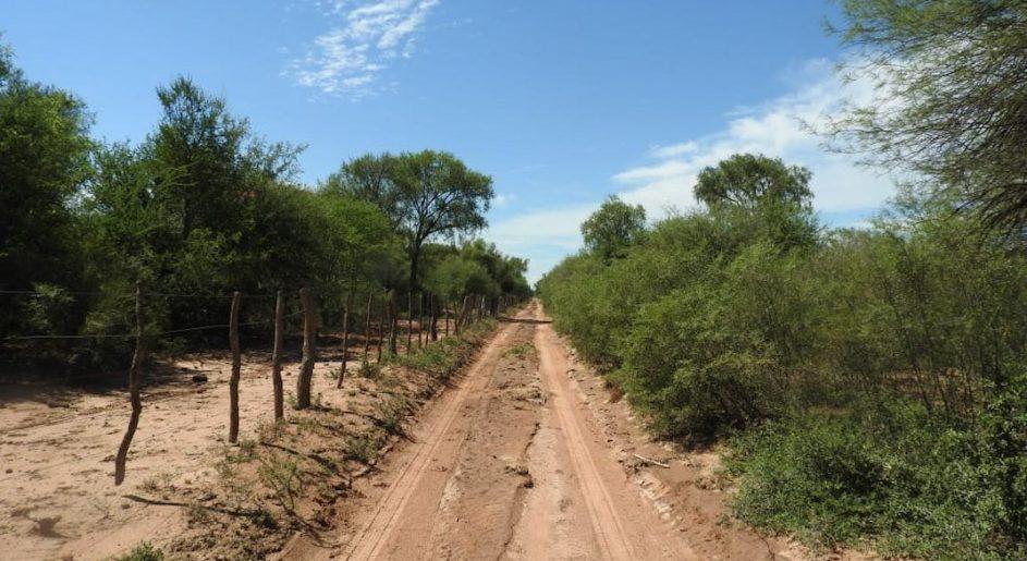 Picadas y cortafuegos para prevenir incendios y proteger los bosques