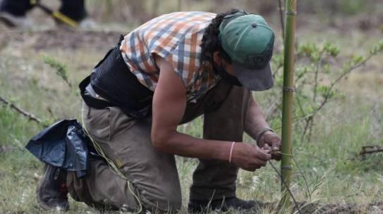 Forestando Córdoba plantó más de 65 mil árboles en 2020