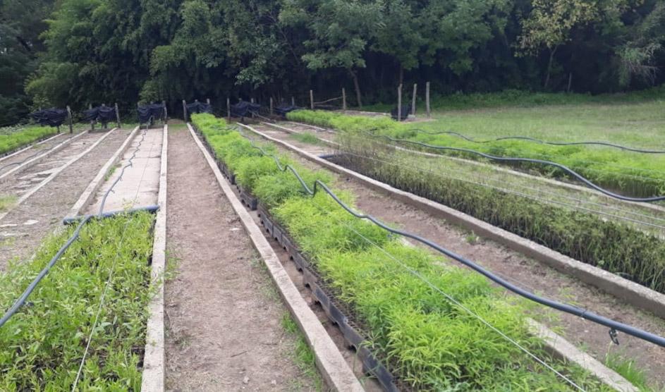 Córdoba suma 59 mil árboles nativos a su programa de forestación