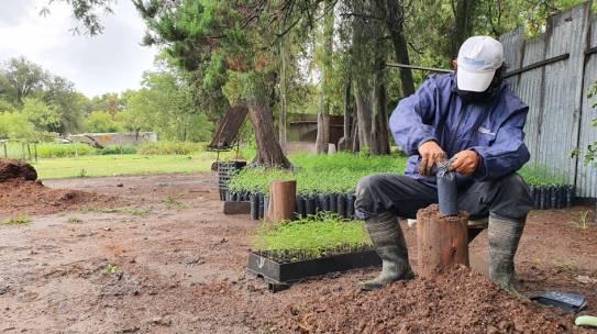 Vivero Provincial de Villa del Totoral: 75 años produciendo plantas
