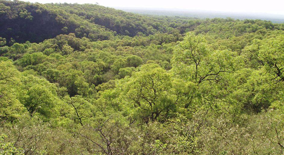 Ambiente: capacitación sobre plataformas digitales para trámites de intervención forestal